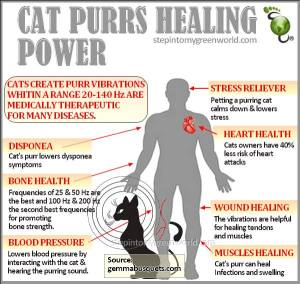 Cats purring healing