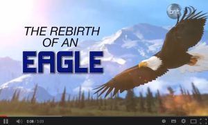 The rebirth of an eagle