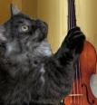 Bonzi viool