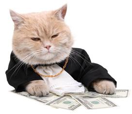 Kat bankier