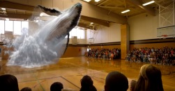 3d-walvis-want